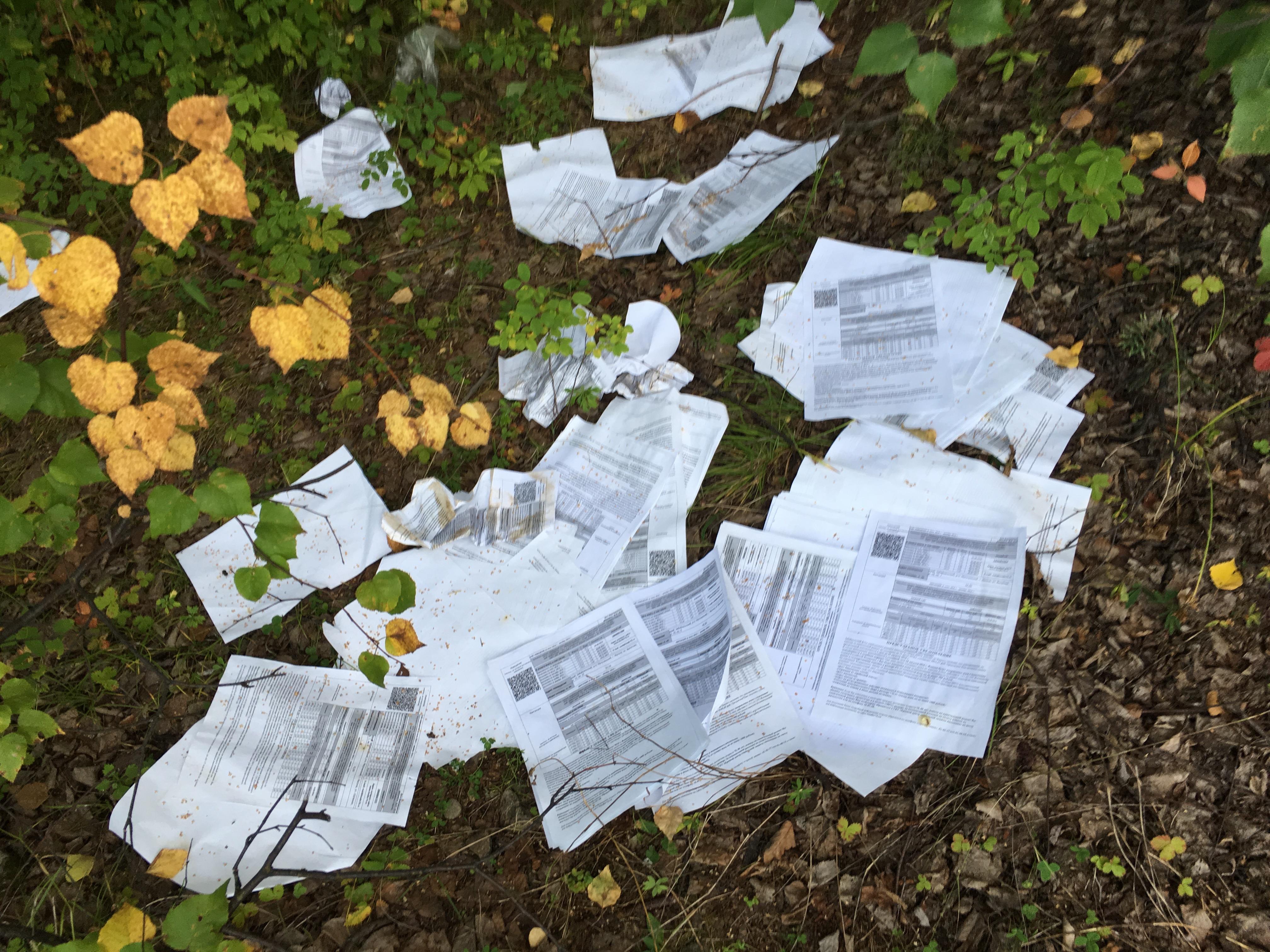«Почта России» нашла сотрудников, бросивших письма влесах Забайкальского края