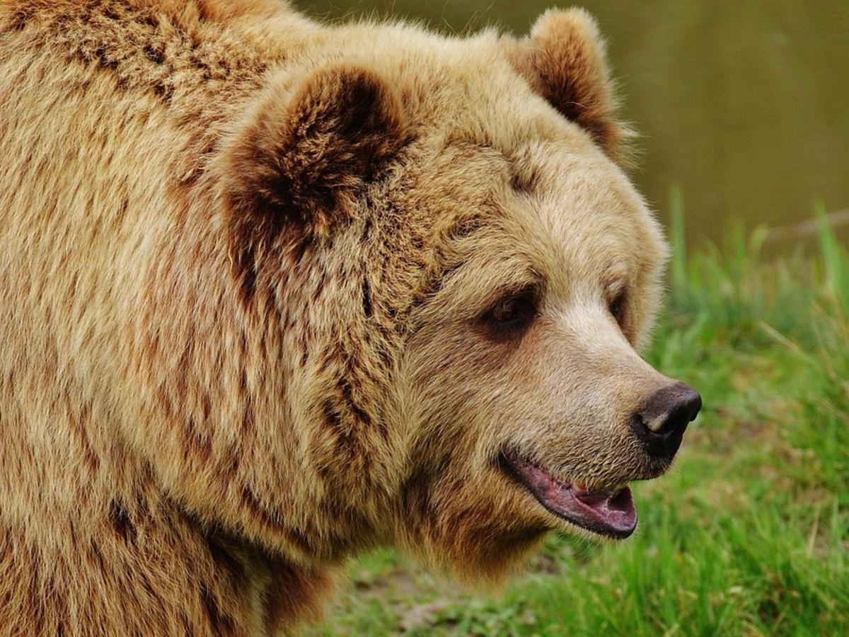Новости марихуана три медведя каша конопля жереха