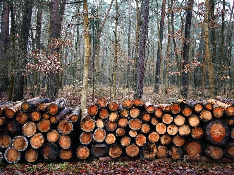«Лучшего предпринимателя» в Чите обвинили в вывозе леса в Китай на 600 млн руб