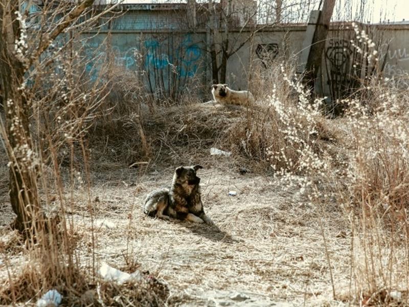 Депутат озвучил проблематику закона о бездомных животных в Забайкалье
