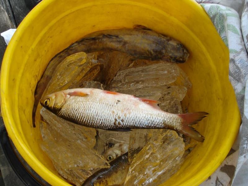 Рыбакам из Забайкалья грозит срок за 52 выловленные рыбы