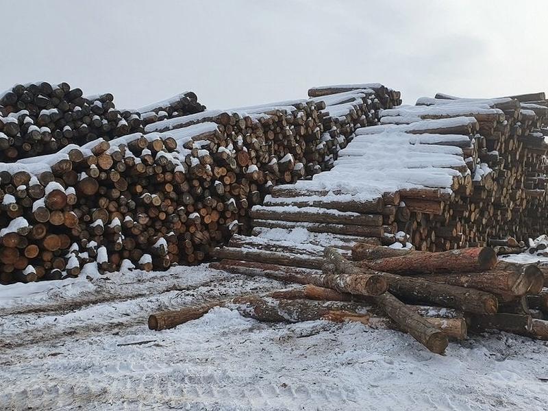 Забайкалье заняло 3 место по незаконным вырубкам леса в России