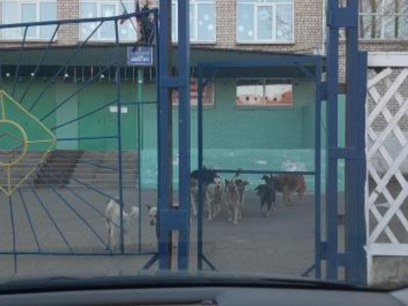 Директор обратилась в ветслужбу из-за стаи собак у школы 17