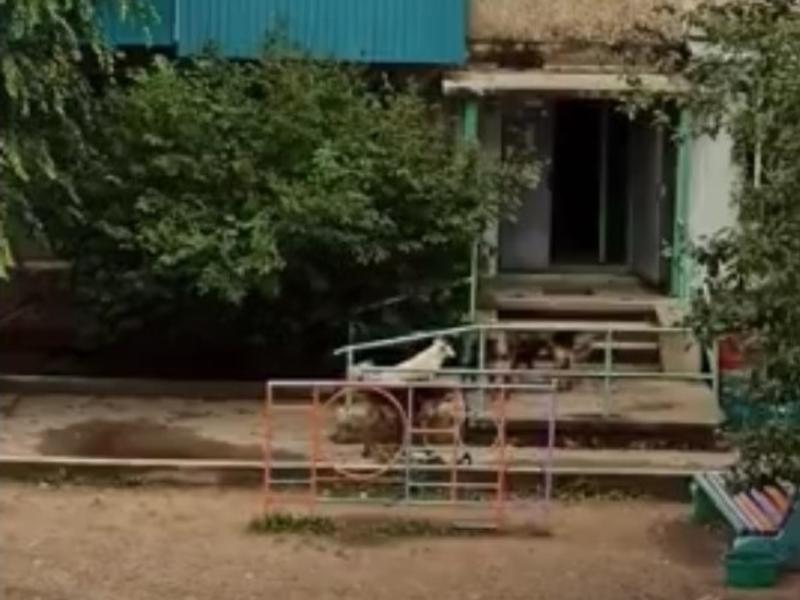 Читинка пожаловалась на стаю собак, бегающих во дворе дома