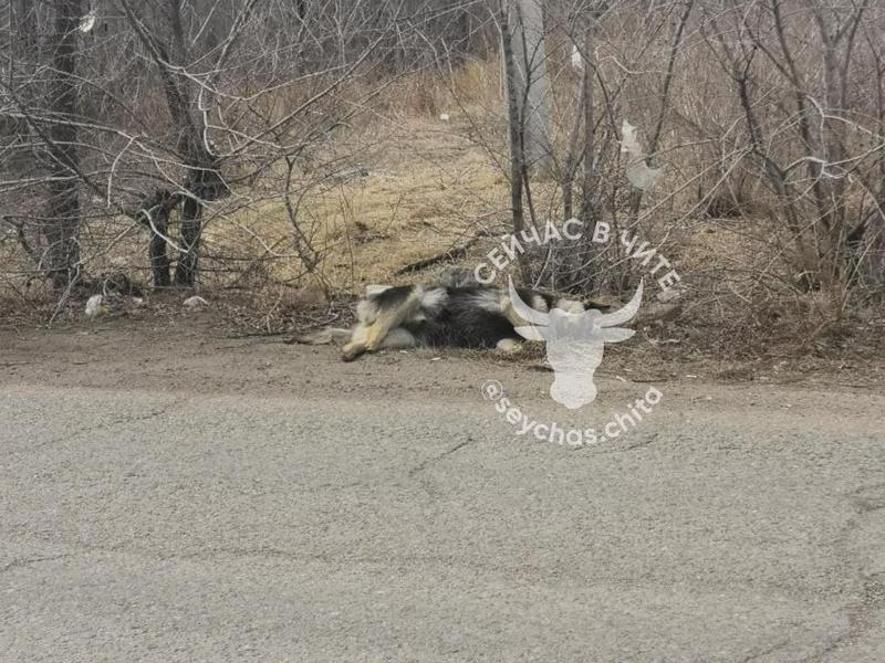 Дорога к мемориалу в мкр Октябрьском устлана трупами бездомных собак