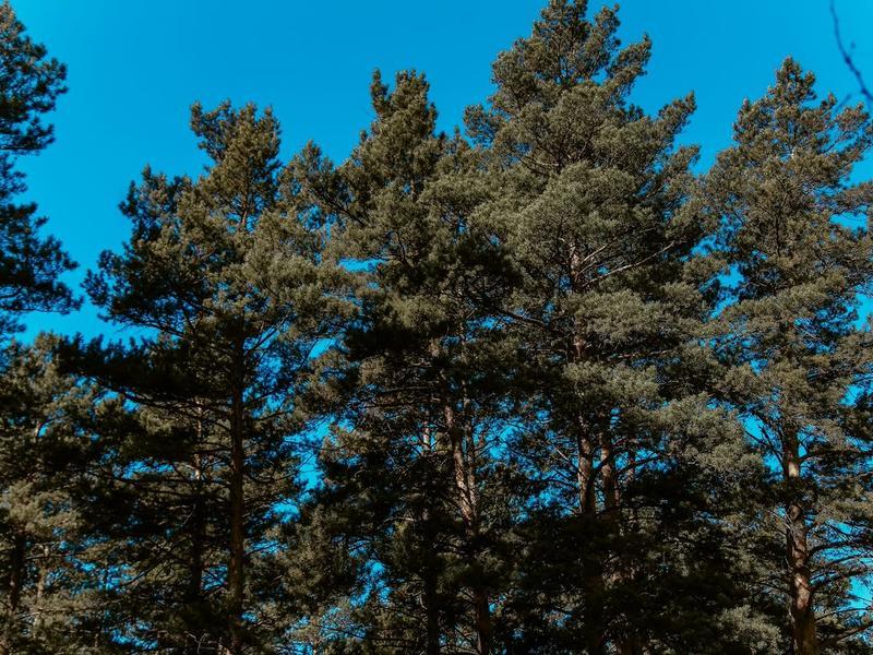 Восстановление 1,2 млн га леса обойдется России в 2,4 млрд рублей
