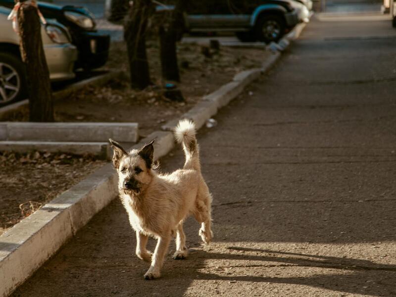 Около 600 раз нападали собаки на забайкальцев за 2020 год
