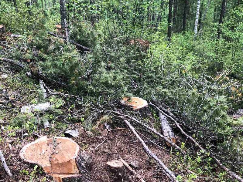 Незаконные рубки леса в Забайкалье будут выявлять с помощью квадрокоптеров