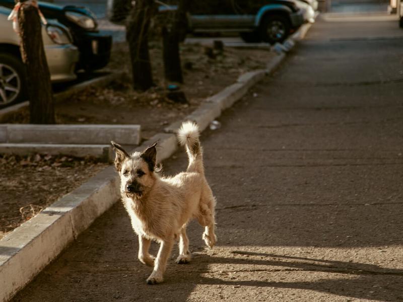 Обязательную регистрацию собак предлагают ввести в России