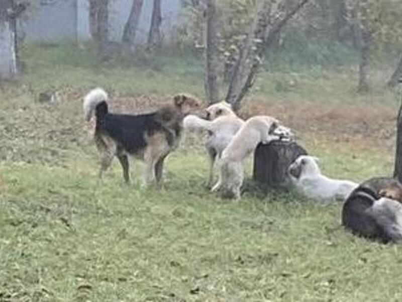 Бродячие собаки напали на ребёнка рядом со входом в Гимназию №12 в Чите