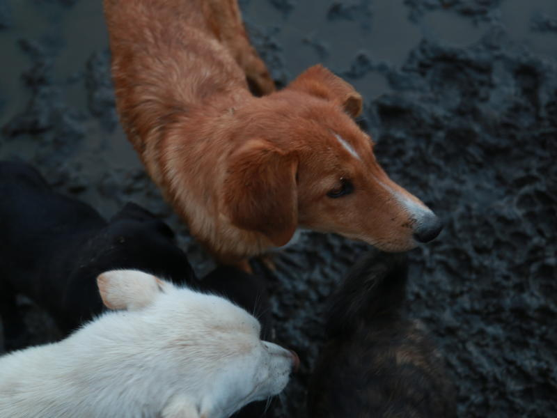 Прокуратура начала проверку по сообщению в СМИ о бездомных собаках в Домне