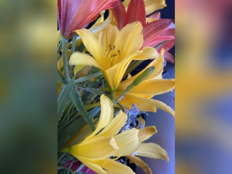 Замгубернатора опубликовала фотографии с букетом цветов, которые занесены в Красную книгу
