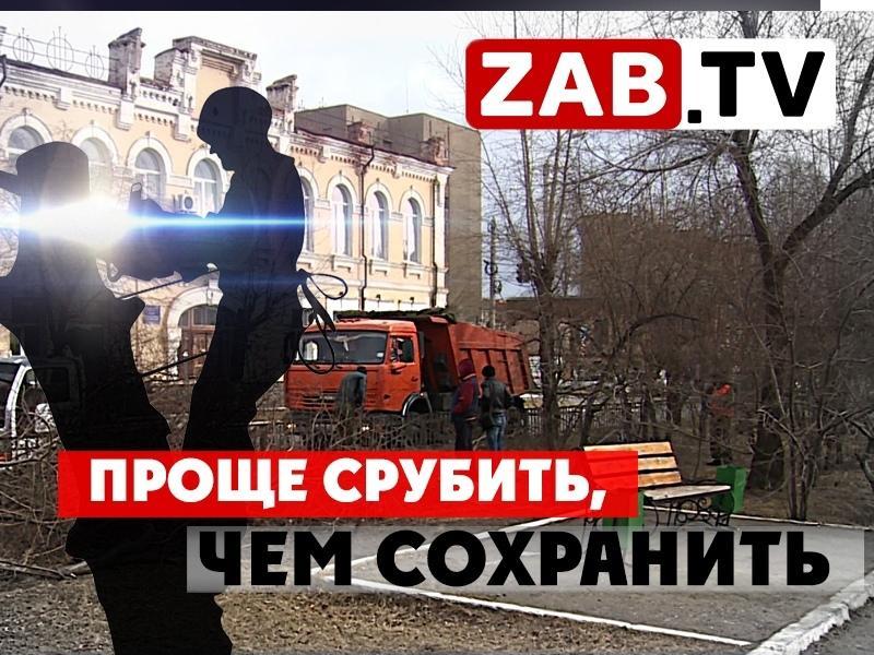 Горожане против вырубки деревьев на аллее имени Горького в Чите — ZAB.TV