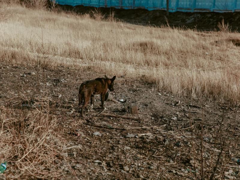 Кабмин согласовал законопроект о маркировке животных в России