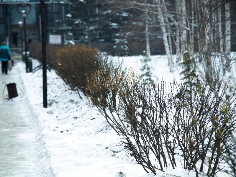 Небольшой снег и морозы до 42° ожидаются в Забайкалье