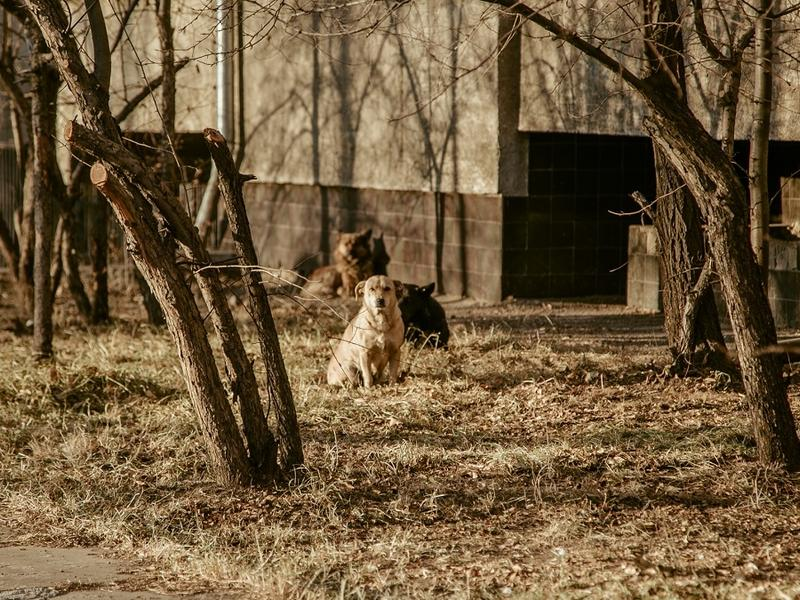 Осипов поручил «удалить бродячих собак» перед праздниками