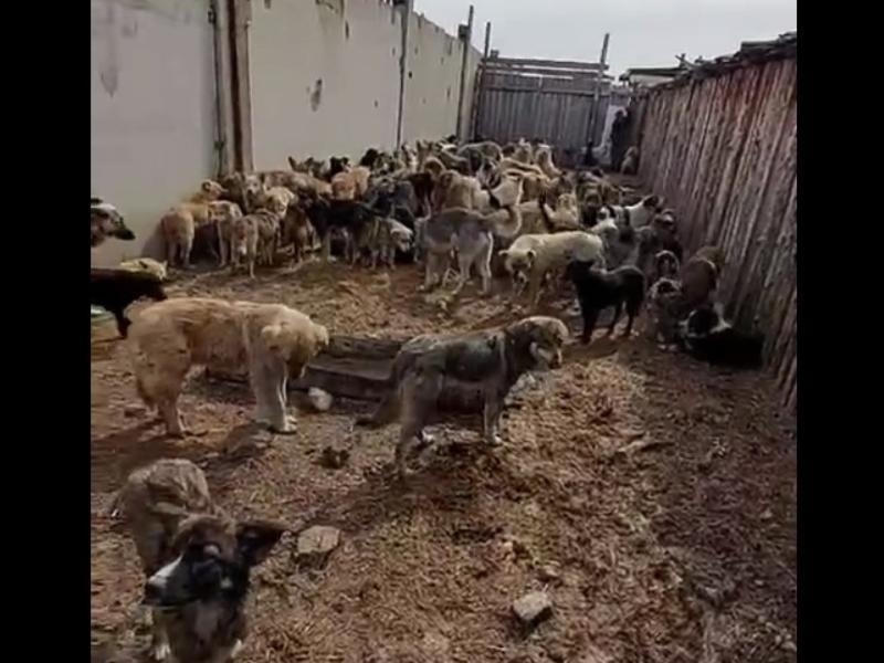 Зоозащитница показала жуткие условия содержания собак в ИК-3 в Чите