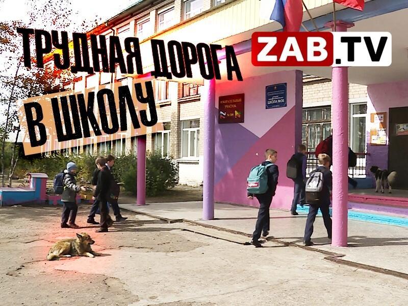 Собачьи «банды» терроризируют детей по дороге в школу и детский сад