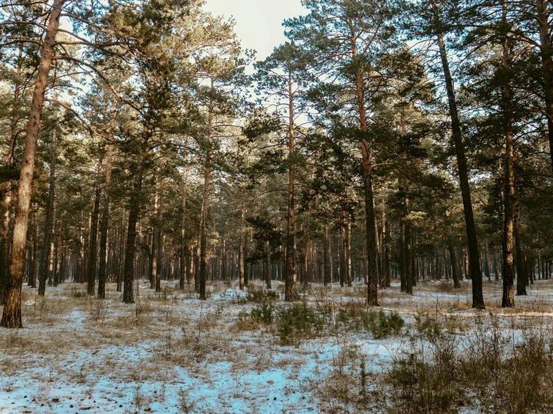 Таможня Читы раскрыла контрабанду леса на сумму более 4,6 млн рублей в КНР