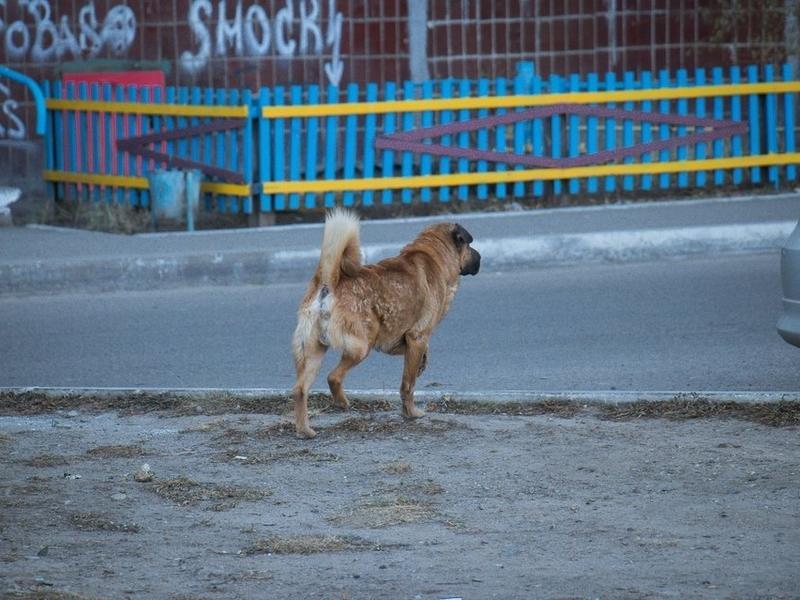 На отлов бродячих собак в Чите направят дополнительные средства