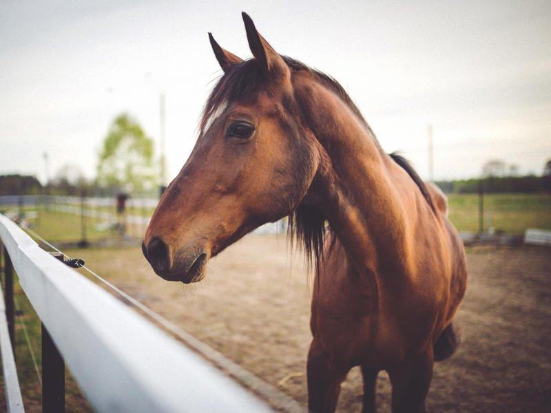 Читинскую госконюшню закрыли на карантин из-за опасной болезни у лошадей
