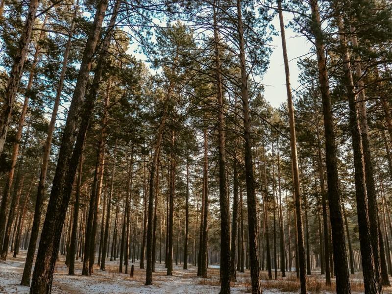 «Черные лесорубы» заплатят свыше 1 млн руб за незаконную добычу леса в Забайкалье