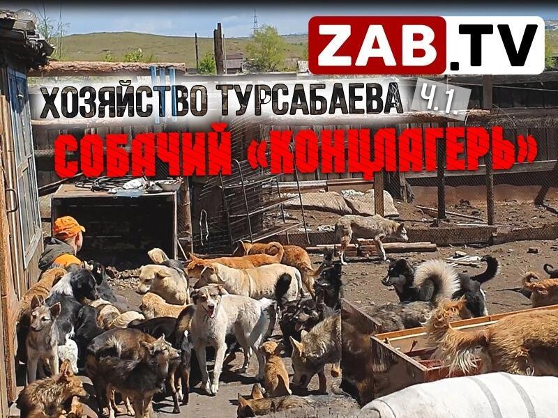В поселке Наклонном обнаружен незаконный и негуманный собачий приют