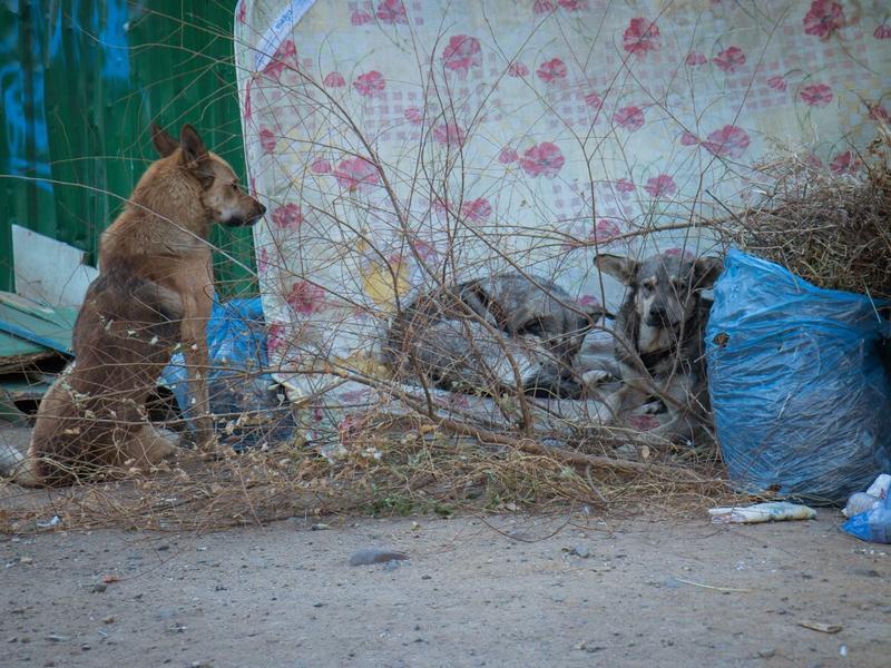 «Ваше собачье дело»: что делать с беспризорными животными?