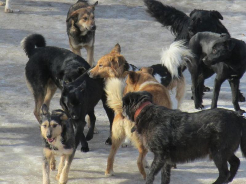 может стая бродячих собак картинки постоянно пополнял