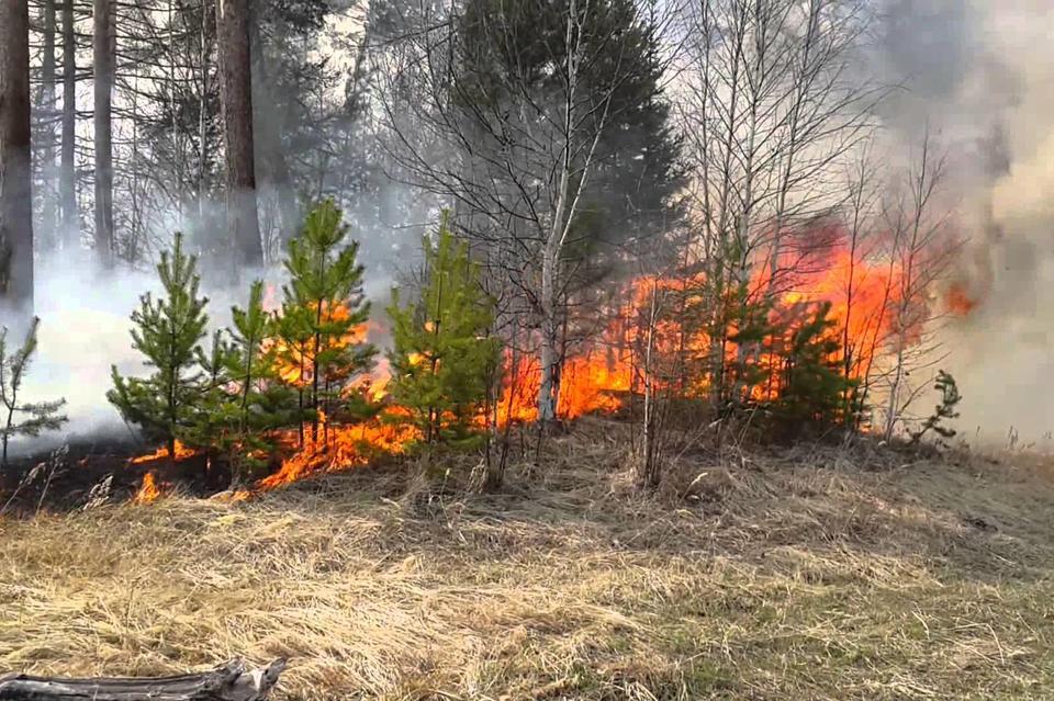 ВЗабайкалье площадь пожаров составляет неменее 770 га