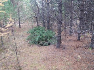 Злоумышленник из Улетовского района угнал мотоцикл и спрятал в лесу