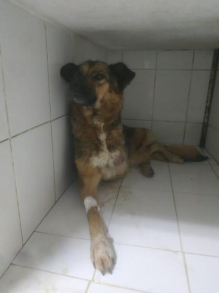Зооволонтёр спасла от смерти бездомную собаку-инвалида в Чите